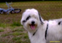 Dodger_and_Snoopy_010