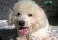 Dolly_3