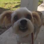 vip lucilla with smile