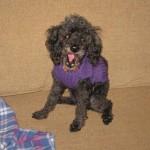 doggie forster 3-4-13 004