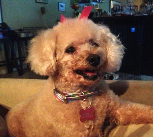 Peach Of Mind Dog Rescue