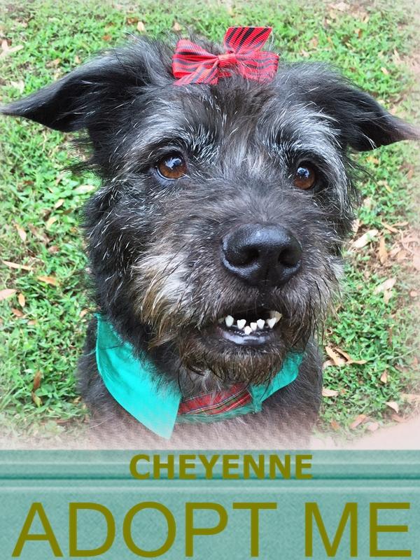 CHEYENNE.FACE1