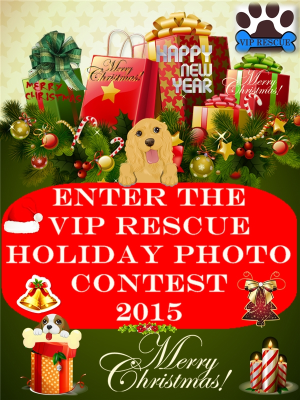 VIP RESCUE HOLIDAY PHOTO CONTEST 2015