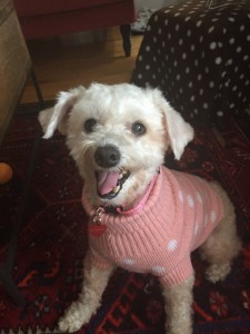vip mitzie sweater