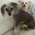 vip tiaria and Kayla