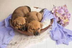 vip lucy lily 6 5 sleep bowl
