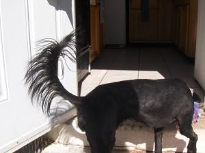 vip tiana tail