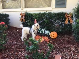 Candy Cane Halloween 1