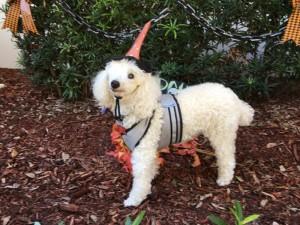 Candy Cane Halloween 2