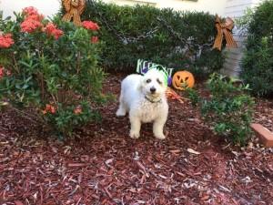 Wilbur halloween 2
