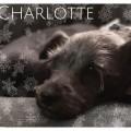vip charlotte aa