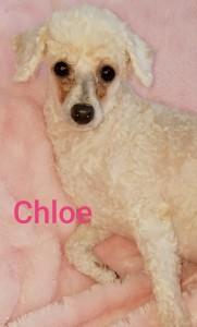 vip chloe cc
