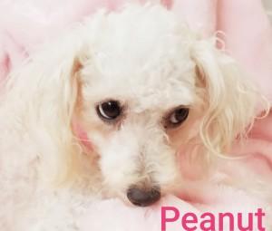 vip peanut a