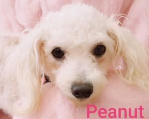 vip peanut b