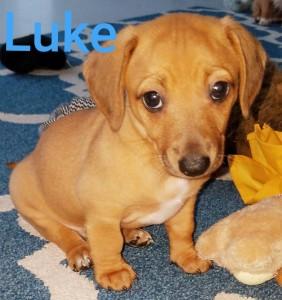 VIP Luke loli