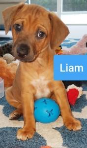 vip liam puppy 2019