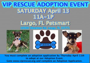 2019largoadoptionevent2019