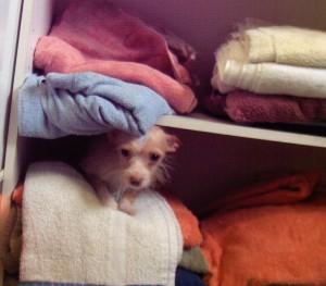 vip Ruby towels