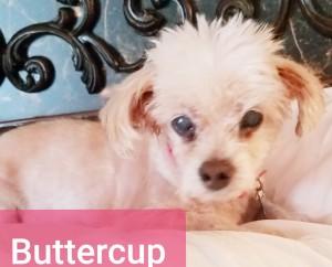 Buttercup 6.4.2019
