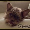 Vip rescue delilah 7.15