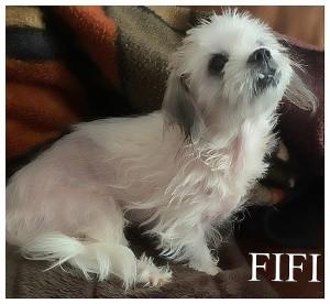 vip fifi 2