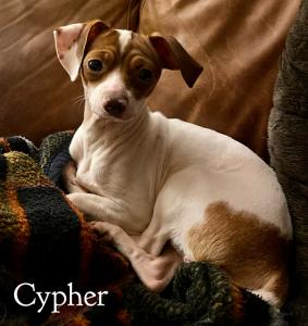 vip cypher bb