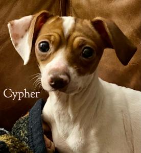 vip cypher cc