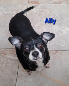 Ally 4