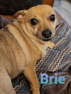 Brie 1