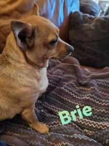 Brie 3