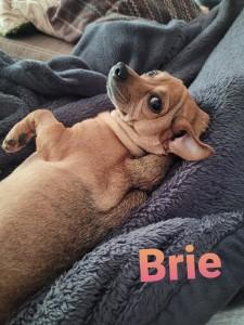 Brie 4